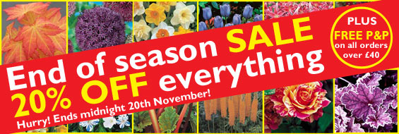 End of Season Sale - 20% off Everything IMAGE BOX