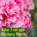 4 for 3 on our Nursery Plants