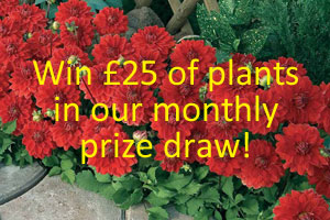 Write a review for a chance to win £25 worth of plants