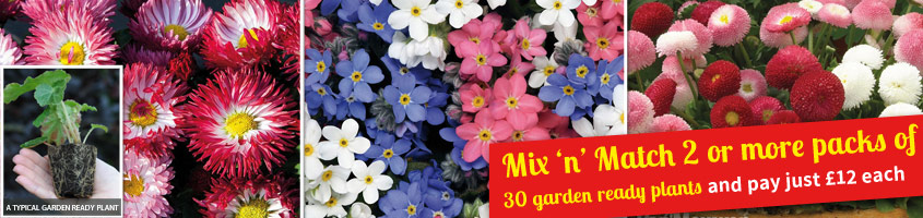Garden-ready mix and match - now just £12 for 30 plants!