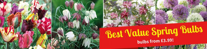 Best Value Spring Bulbs