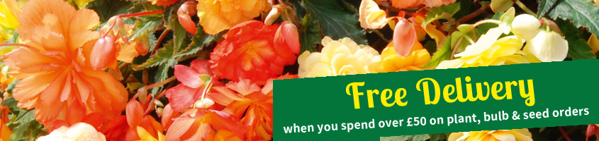 FREE delivery when you spend over £50 on plant, bulb and seed orders