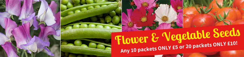 Flower & Vegetable Seeds - 10 packets for £5 or 20 packets for £10
