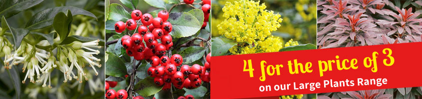 Large Plants range - 4 for the price of 3