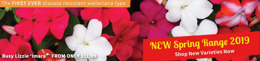 Spring 2019 New Varieties
