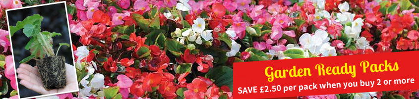 Garden Ready Plants - Choose from 15 or 30 Garden Ready Plants from ONLY £9.99 or SAVE £2.50 per pack when you buy 2 or more