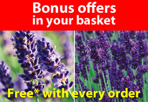 Bonus offers in your basket
