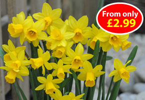 Best Value Spring Bulbs - from only £2.99