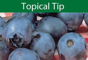 Topical Tip Choice - Blueberries