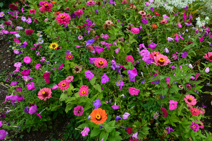 How To Plant An Annual Border Van Meuwen