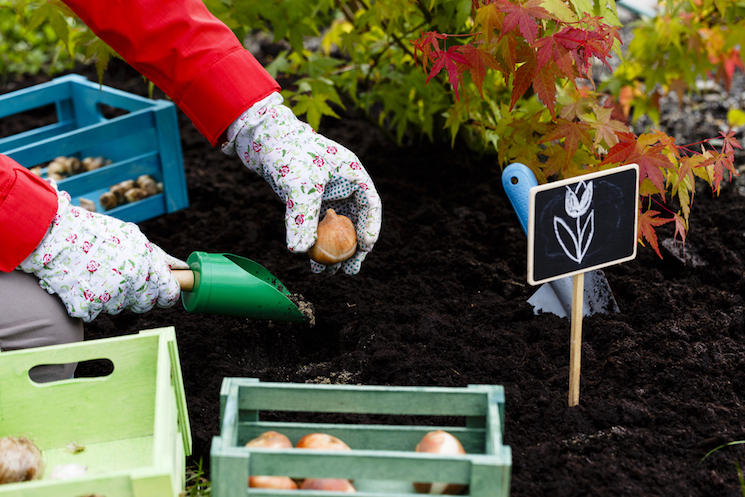 planting bulbs adds colour to your gardens