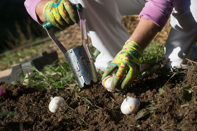 hand bulb planter Van Meuwen