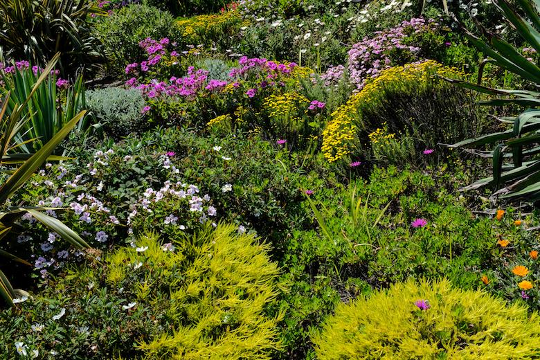 flourishing plants in a coastal garden