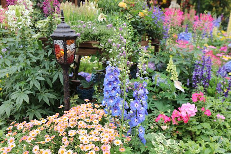 colourful perennial garden border