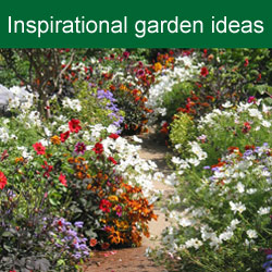 Beginners gardening tips guides uk van meuwen for Garden planting ideas uk