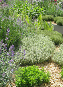 Ground cover plants with gravel mulch