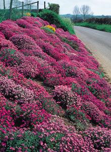 Similiar Best Plants For Slopes Keywords