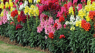growing plants for ground cover