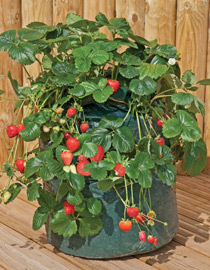Garden Design With How To Plant Hanging Baskets And Containers With Large  Container Gardening From Vanmeuwen
