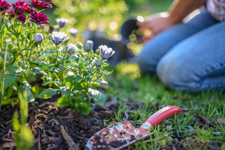 planting-perennials
