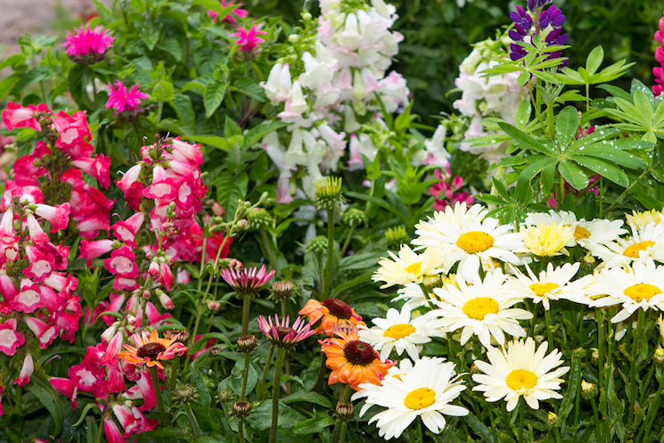 how to plant and grow perennials