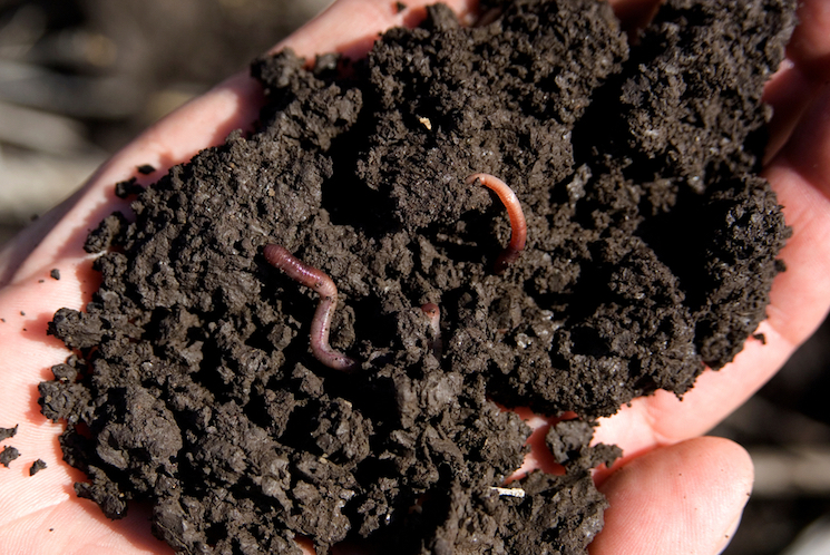 worms and soil in hands