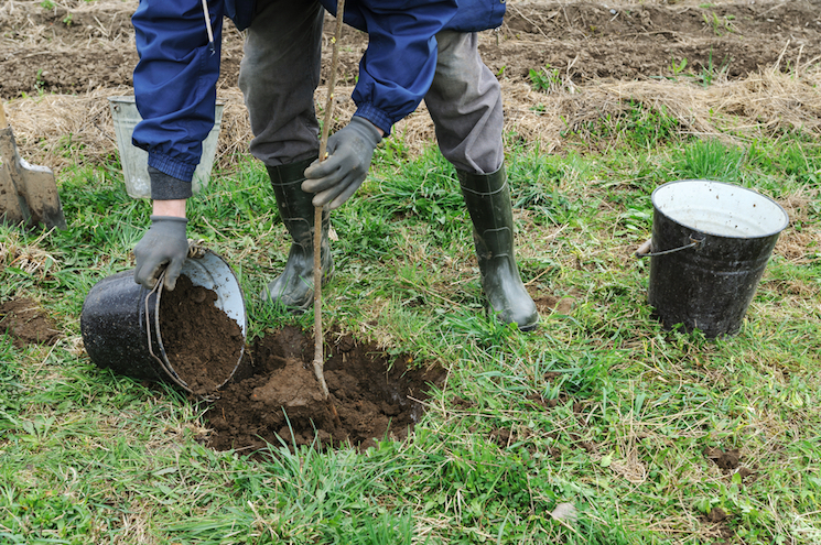 man putting soil into a bucket