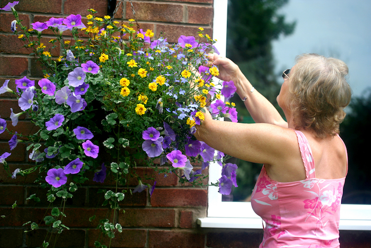 feeding hanging baskets
