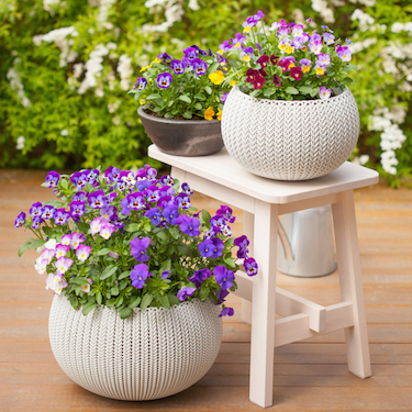 how to plant pots & containers
