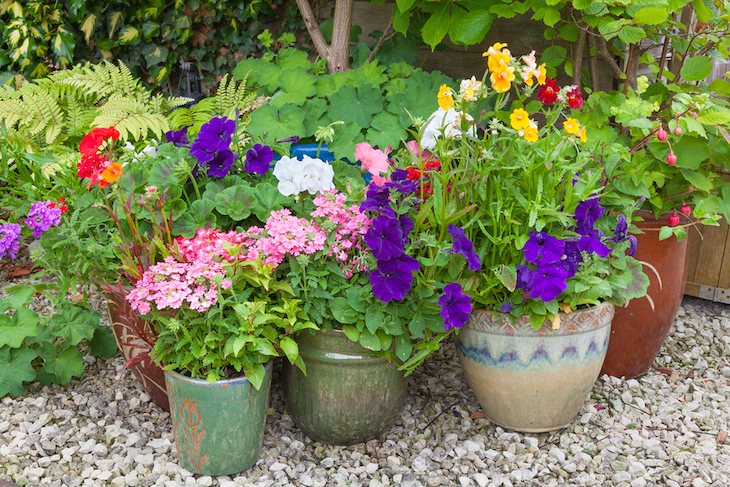colourful plants in containers and pots