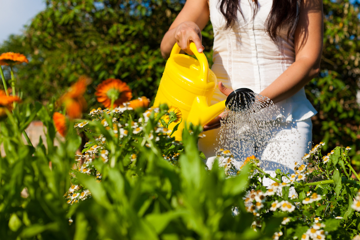 woman watering flowers with can in summer