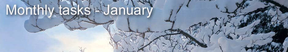 monthly tasks january