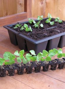 how to plant and grow plug plants van meuwen. Black Bedroom Furniture Sets. Home Design Ideas