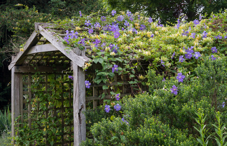 top ten climbing plants