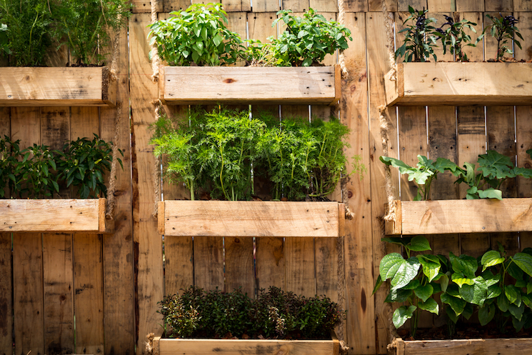 vertical vegetable growing