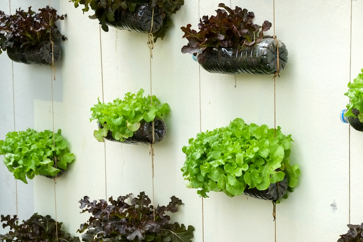recycled plastic bottle vertical planters vegetables