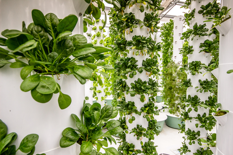 vertical aeroponic farm