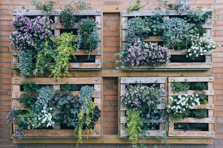 Vertical gardens in pallets