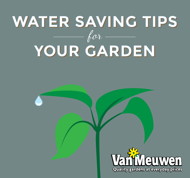 water saving tips infographic lead image van meuwen