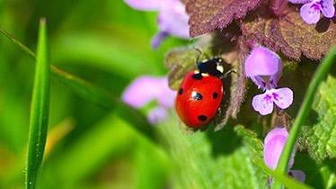 how to create a wildlife garden