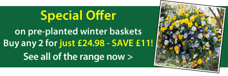 Winter Pre-planted Baskets offer