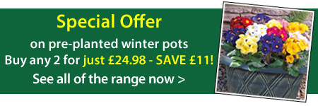 Winter Pre-planted Pots offer